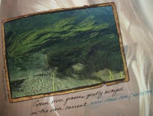Firehole River Grasses