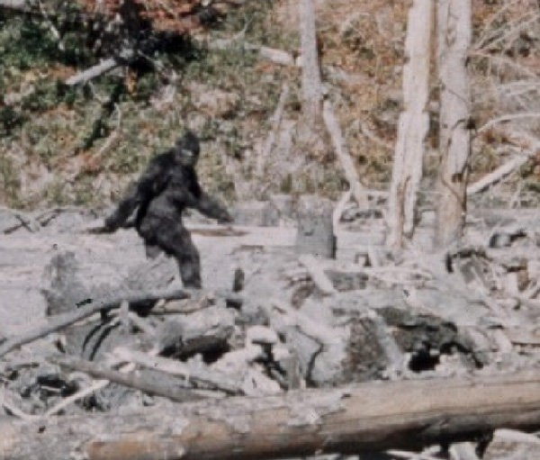 Featured Question With Forrest Advice For Bigfoot