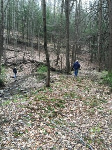 looking for Morels