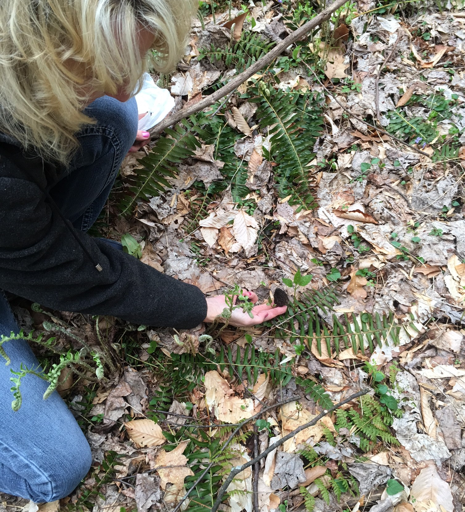 finding morel mushrooms