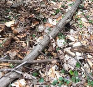 spot the morel mushroom!